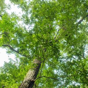 林点描、自然と共生するマンションのネックは蚊?