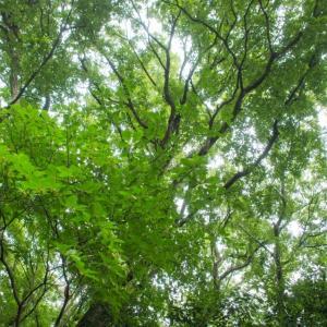 林点描、飯能にメガソーラー計画?
