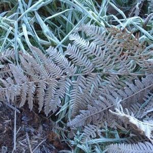 フランスの田舎暮らし 霜の降りた朝