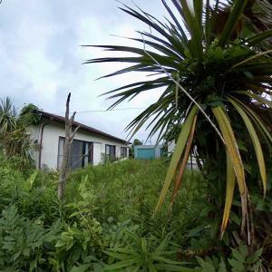 大網戸建 ジャングルの様な庭の変化