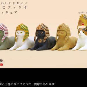 スフィンクスっぽい日本猫?!かわいいかわいいねこファラオ