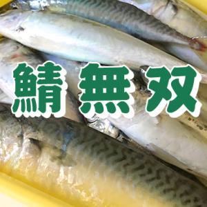 【8/12 釣果】神戸ベイエリアでサバゲーしてきた!【鯖大漁!】