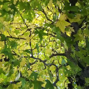 植物のエナジーと未来のヘルスケア