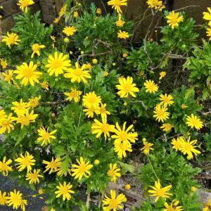 花は茎の上に咲き、茎は地につながって