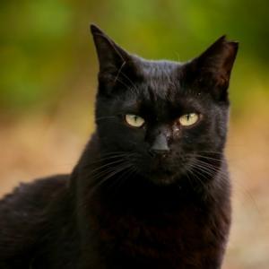 猫の不思議な力