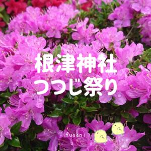 根津神社のつつじ祭りを写真付きでご紹介。4/25は多くの花が満開でした!