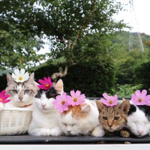 コスモスをのせた5匹の猫