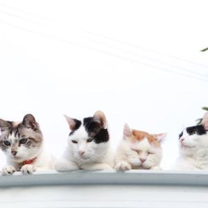 屋根の上の4匹のねこ 4 cats on the roof