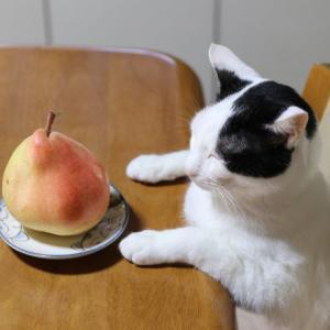 テーブルの上のマルゲリット・マリーラ
