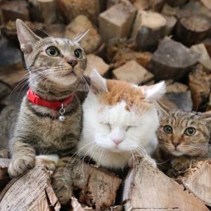 薪の上でしろ毛づくろい