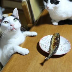 テーブルの上の秋刀魚