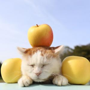 黄香 りんご