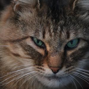 野良猫のお顔