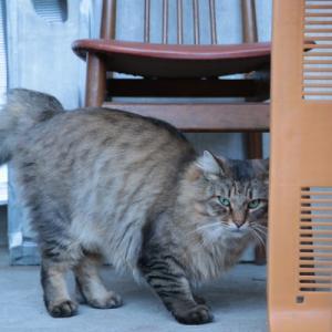 野良猫 stray cat