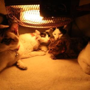 こたつの中の7匹の猫