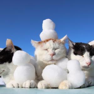 雪だるまをのせた3匹の猫 snowman