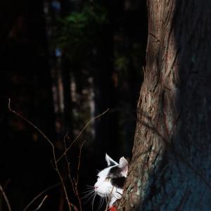 杉の木からひょこ