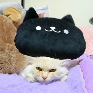 黒猫クッションを乗せたもふもふ
