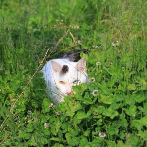 草原で遊ぶみみ