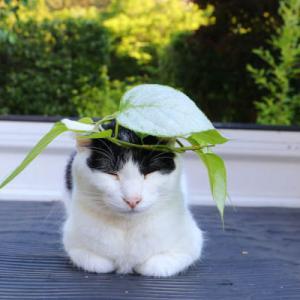 色がついたマタタビの葉と猫たち