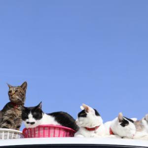 軽トラの屋根の上の5匹の猫