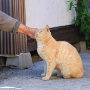 野良猫をなでなで