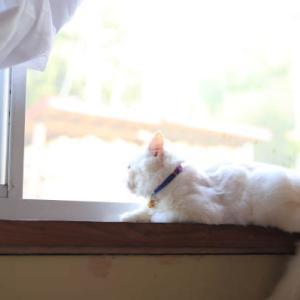 窓辺のもふもふ