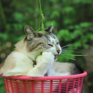 草を食べるくろ