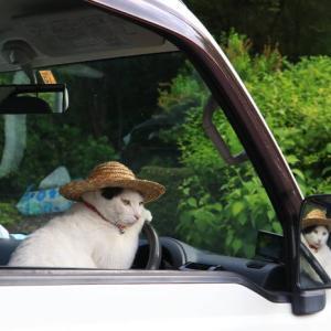 軽トラで麦わら帽子