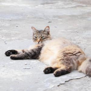 ちょびともふもふ野良猫