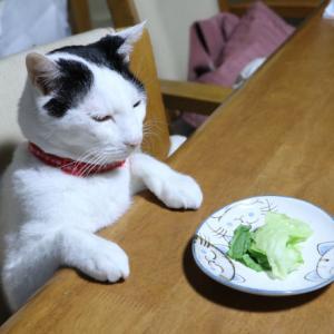 テーブルの上のレタスサラダ