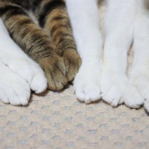 お手々を揃えた4匹の猫