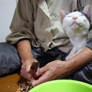 ちびと栗の皮むき 栗ご飯
