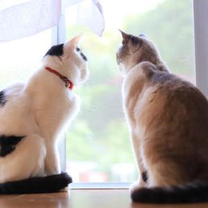 窓辺のくろとちび