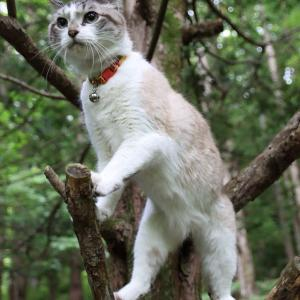 枝からぴょん