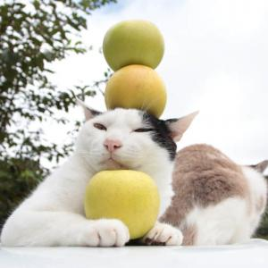 黄王 りんご