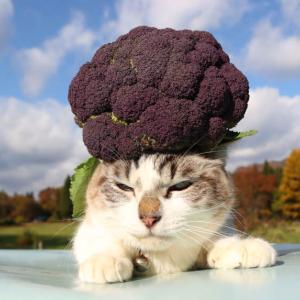 紫カリフラワー のせ猫