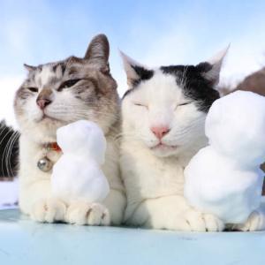 雪だるまのせ猫