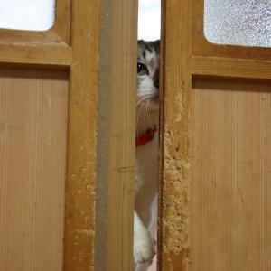 戸を開けられなかったくろ