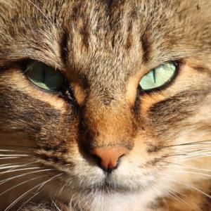 野良猫お顔