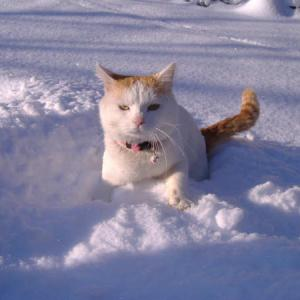 しろ3歳の頃の雪