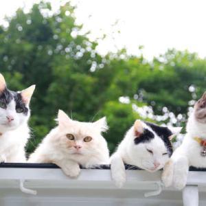軽トラ屋根の上の4匹の猫