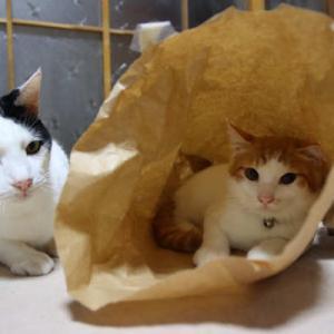 紙袋と猫たち Cat and paper bag