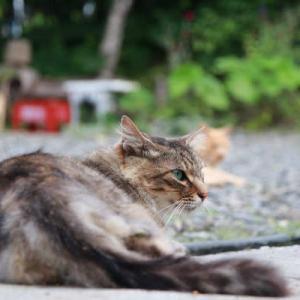 後ろの野良猫
