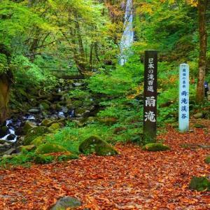 紅葉を見に雨滝へ!