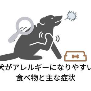 【写真付き】犬がアレルギーになりやすい食べ物と主な症状