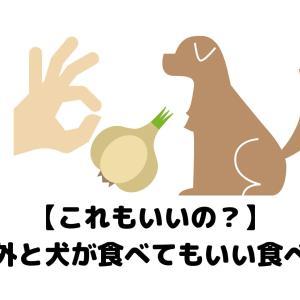 【これもいいの?】意外と犬が食べてもいい食べ物