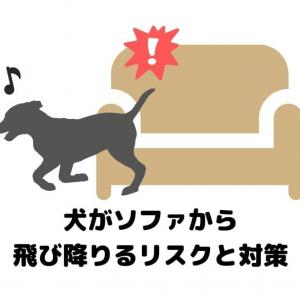 【ハラハラする…】犬がソファから飛び降りるリスクと対策