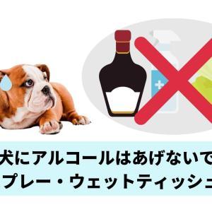 犬にアルコールはあげないで|消毒スプレー・ウェットティッシュもNG