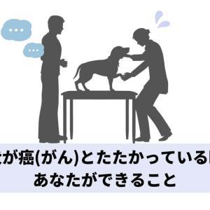 愛犬が癌(がん)とたたかっている時にあなたができること